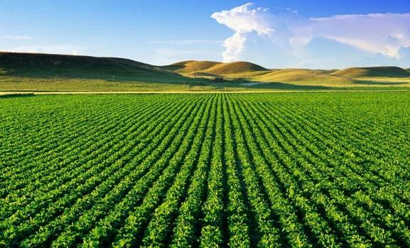 Nga aktrimi e marketingu në bujqësi e blegtori