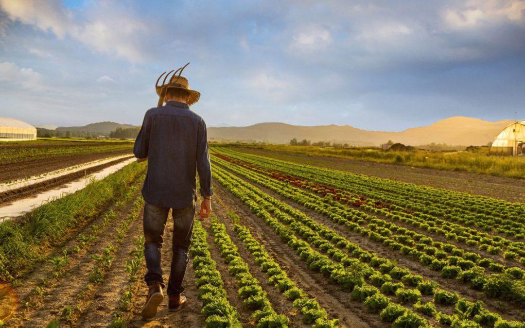 Bujqit e rinj kosovarë kërkojnë mbështetje nga shteti