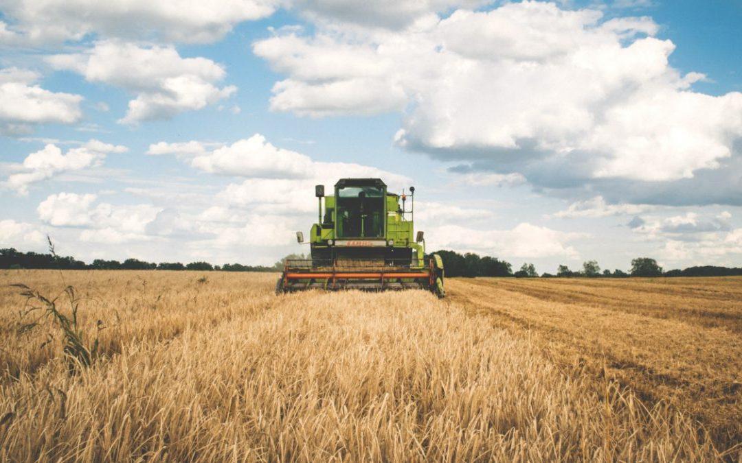 Rritet numri i grave kosovare që i kthehen bujqësisë